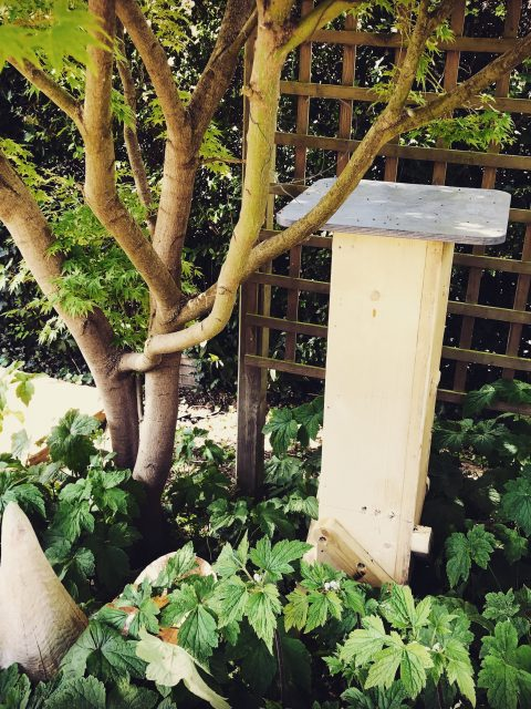 Beehive in its new home